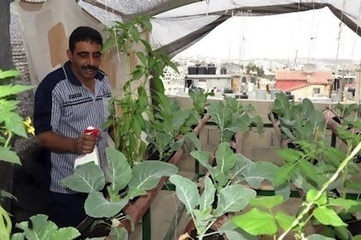 Rooftop gardens provide food and hope for cash-strapped Palestinians — City Farmer News   Permaculture Digest   Scoop.it