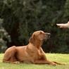 Kranky K9 Dog Training