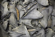 #CostaRica says save the #Sharks But are they ? | The Wild Planet | Scoop.it