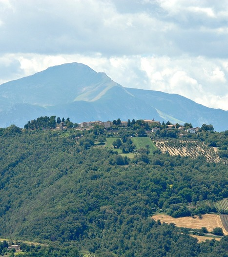 Nelle Marche 300 alberi per ogni cittadino | Le Marche un'altra Italia | Scoop.it