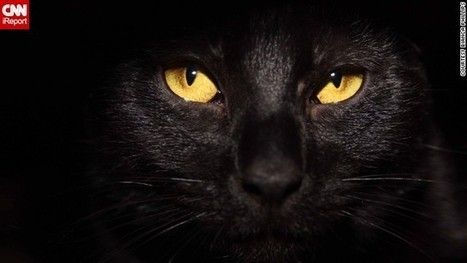 To be a black cat on Halloween | Feline Health and News - manhattancats.com | Scoop.it