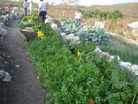 GOBCOL: Agricultura orgánica, actividad viable para nuestra entidad | Cultivos Hidropónicos | Scoop.it