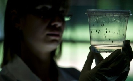 Zika : Les chercheurs de l'Inserm et du CNRS ont identifié la cellule responsable de l'entrée du virus dans les cellules du cerveau - Created by Eline Ulysse - In category: bassin-atlantique-Appli,... | Options Futurs Rio+20 | Scoop.it