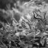 Leica Photography
