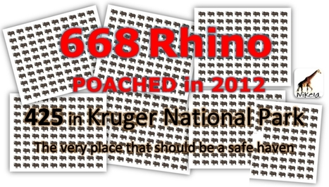 Official 2012 Rhino Poaching Deaths: 668 | Rhino poaching | Scoop.it