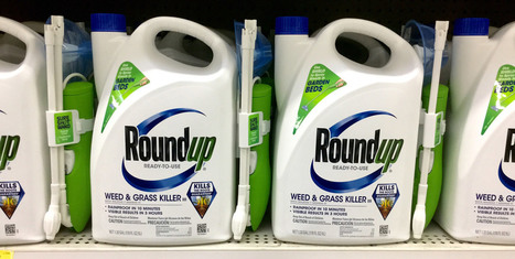 New Evidence About the Dangers of Monsanto's Roundup | The Barley Mow | Scoop.it