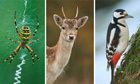 Exotic army of invading wildlife changing the nature of UK cities | Conservation & Environment | Scoop.it