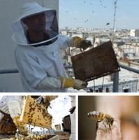 Le miel des toits de Monoprix : Nouveautés : Monoprix.fr   Urban Greens Watch   Scoop.it