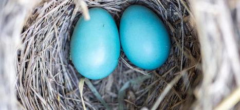 21 astuces Twitter dont vous ignoriez probablement l'existence | outils numériques pour la pédagogie | Scoop.it