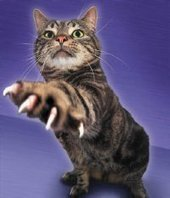Cat Man Do   Dr. Arnold Plotnick: Bartonella Shmartonella (Cat Scratch)   Feline Health and News - manhattancats.com   Scoop.it