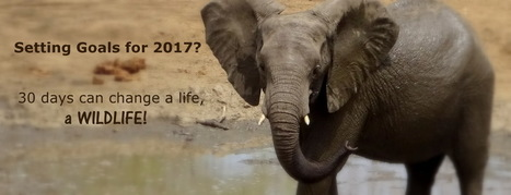 Setting Goals for 2017? How 30 days can change a life, a wildlife | Wildlife Conservation: People and Stories | Scoop.it
