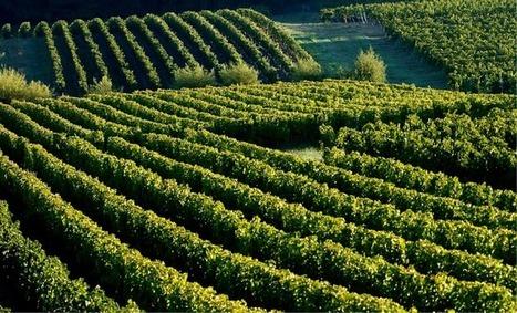Les viticulteurs bordelais soulagés du maintien des droits de plantation en Europe - Aqui.fr | BIENVENUE EN AQUITAINE | Scoop.it