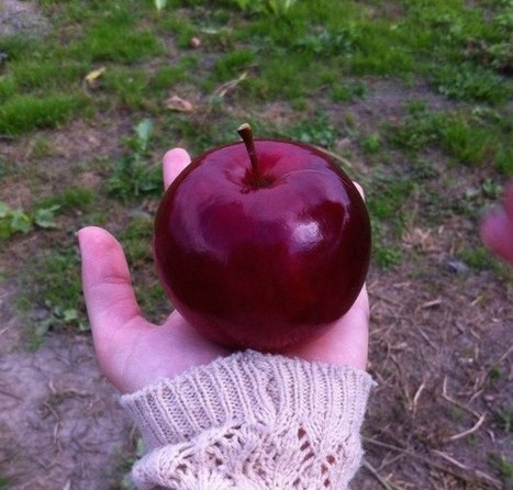 The perfect apple | TSU Blogging | Scoop.it