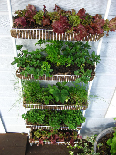 Upcycled Vertical Garden Project » The Homestead Survival | Wellington Aquaponics | Scoop.it
