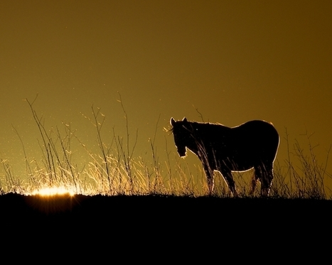 Return to Freedom: Inside a Wild Horse Sanctuary | 100 Acre Wood | Scoop.it