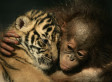 Images Of Endangered And Threatened Species (PHOTOS)   Xposed   Scoop.it