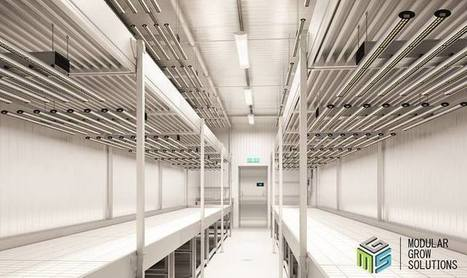 Commercial grow room design in Modular Grow Solutions Scoopit
