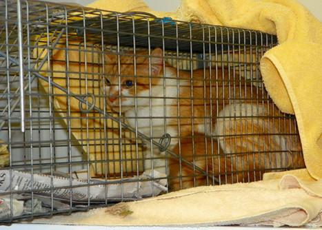 Alexandria's TNR program prospers under leadership of interim shelter director - Examiner.com   Animals R Us   Scoop.it