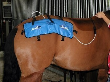Equine Physical Therapy and Electrical Stimulators | Equine matters | Scoop.it