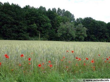 L'agriculture de conservation | Les colocs du jardin | Scoop.it