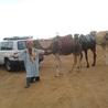 morocco desrt tours ,marrakech desert tours , camel trek in morocco , fes to marrakech desert tours ,sahara travel merzouga , morocco tours 4x4