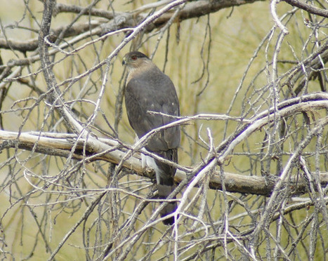 Butlers Birds and Things: Recharging the Birding Fun at the ... | Birds and Birding | Scoop.it