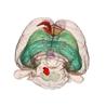 chemosensitivity of locus coeruleus and its implications in REM sleep