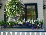 Window Boxes Captivate on the Curb | Wisconsin living | Scoop.it