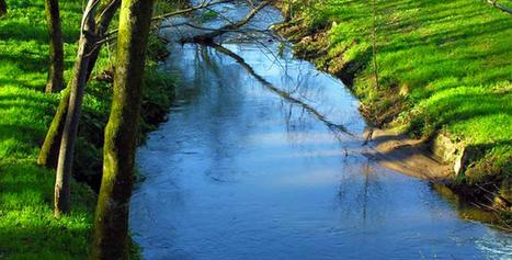Olor del agua - Actualidad Medio Ambiente | Actualidad forestal cerca de ti | Scoop.it