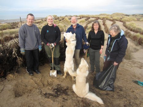 Life after Christmas – how old trees and your time are helping to protect Formby's sand dunes | Geography @ Stretford | Scoop.it