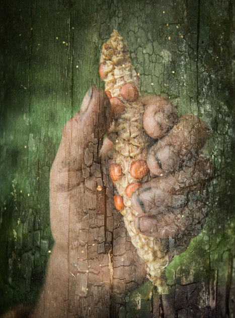 We Are What We Eat: Foraging in the Amazon Rainforest   Rainforest EXPLORER:  News & Notes   Scoop.it