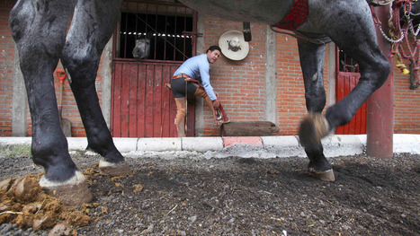 Retired Charreria Horses Start Second Careers in Mexico City | #EAv (e)LOCRIS - Is Empire Avenue worth it? | Scoop.it
