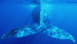 Sounds of the Sea: Listening to the sounds of the deep ocean floor on line   OUR OCEANS NEED US   Scoop.it