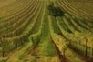 Sur les routes des vins du monde | Vins, oenotourisme, wine & passion. | Scoop.it