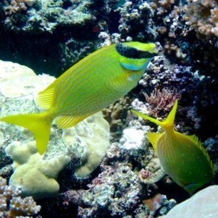 I've got your back: #Fish really do look after their mates! | Rescue our Ocean's & it's species from Man's Pollution! | Scoop.it