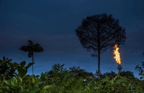 El petróleo pone en peligro la biodiversidad del Amazonas - Ecoportal.net | ECOSALUD | Scoop.it