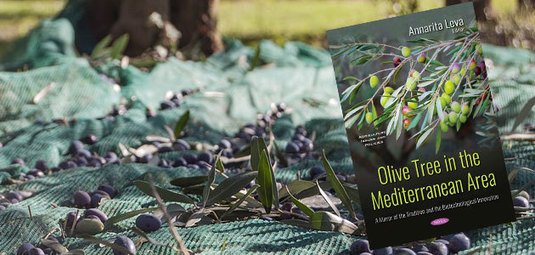 The Olive Tree in the Mediterranean Area: A Mirror of the Tradition and the Biotechnological Innovation