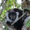Madagascar Conservation News