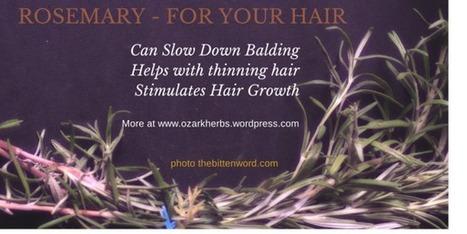 Rosemary Series #2 - Your Hair | Plantsheal | Scoop.it