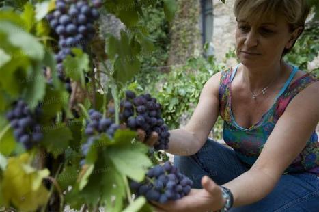 Le vin au féminin - Le Républicain Lorrain   L'édition numérique du vin   Scoop.it