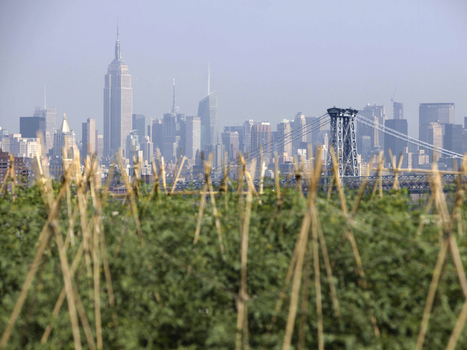 Rooftop farms: The future of agriculture? | Sustainable Urban Agriculture | Scoop.it