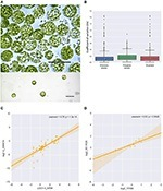 Frontiers | The Physcomitrella patens Chloroplast Proteome Changes in Response to Protoplastation | Plant Proteomics | plant cell genetics | Scoop.it