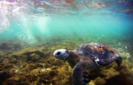 Le Chili protégera les eaux de l'île de Pâques, un signal fort en défense des océans | The Blog's Revue by OlivierSC | Scoop.it