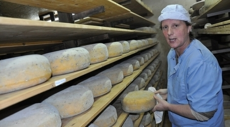 Mayenne : Le gouda de Bazougers dans des burgers bios  | The Voice of Cheese | Scoop.it