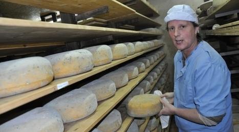 Mayenne : Le gouda de Bazougers dans des burgers bios | The Voice of Cheese | Scoop.it