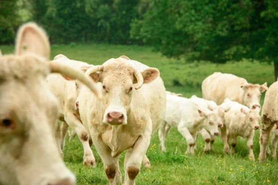 Retour des haies bocagères en Auvergne : « Pour les agriculteurs, les sécheresses sont des détonateurs » - Montluçon (03100) - La Montagne