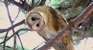 The Owl | catnipoflife | Scoop.it