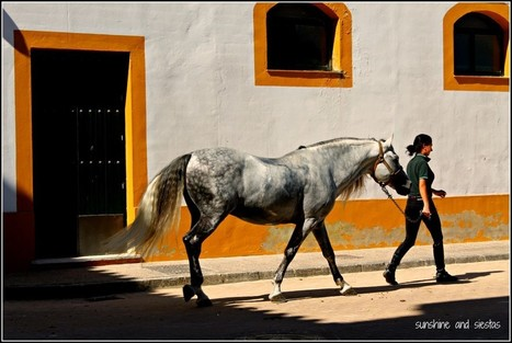 Seville Snapshots: The Real Escuela Ecuestre de Jerez | Equestrian Vacations | Scoop.it