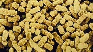 Bacteria 'have lessons for economy' | Complex Insight  - Understanding our world | Scoop.it