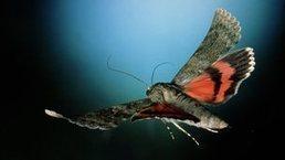 Cómo flotan los insectos - BBC Mundo | Bichos en Clase | Scoop.it